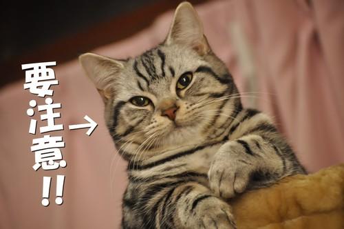 006_20120111133850.jpg