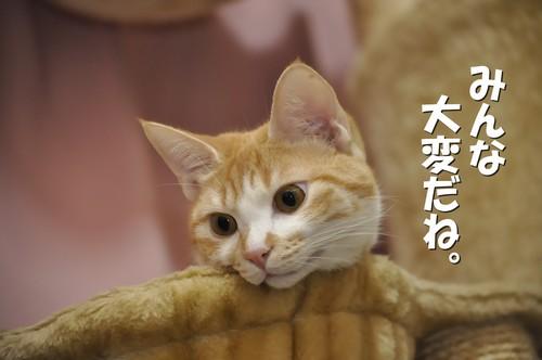 006_20120202095812.jpg