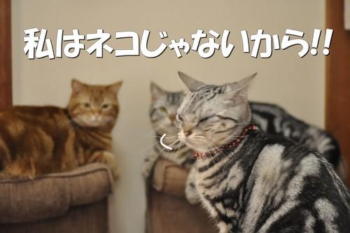 006_20120309144111.jpg