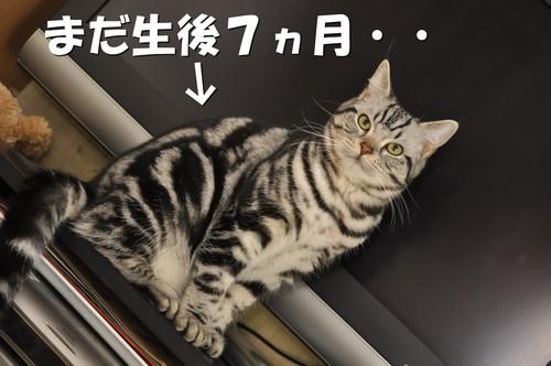 007_20120111133933.jpg