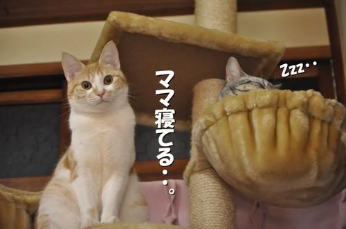007_20120229151501.jpg