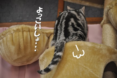 008_20120309144111.jpg