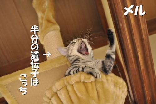 009_20111129143938.jpg
