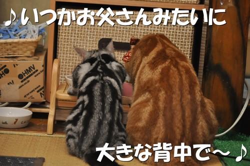 009_20120107200032.jpg