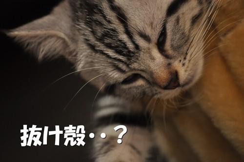 010_20110814024916.jpg
