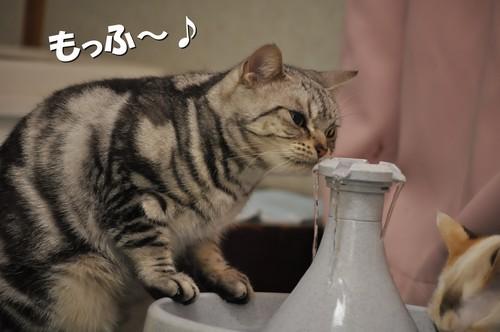 010_20111129143937.jpg