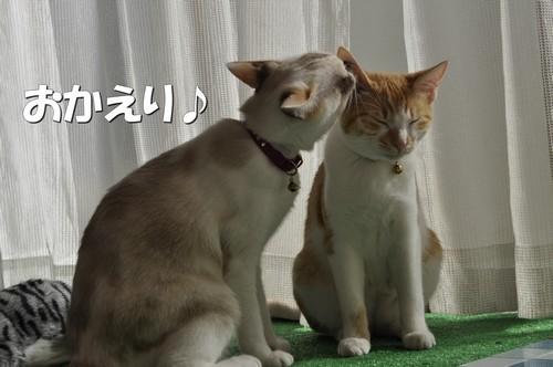 011_20111109131323.jpg