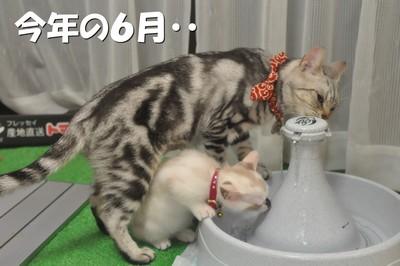 011_20111129143937.jpg