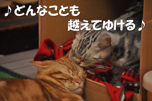 011_20120107200032.jpg