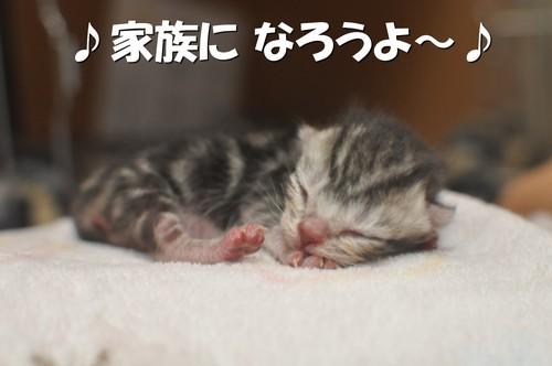 012_20120107200032.jpg