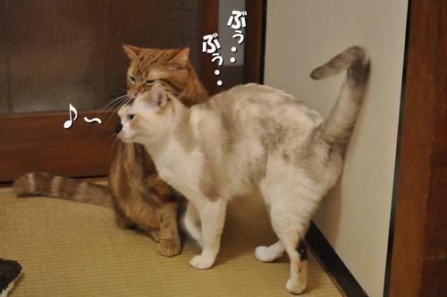 012_20120229151500.jpg