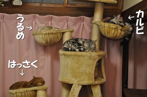012_20120309144227.jpg