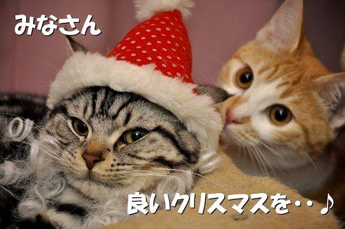 017_20111219133653.jpg