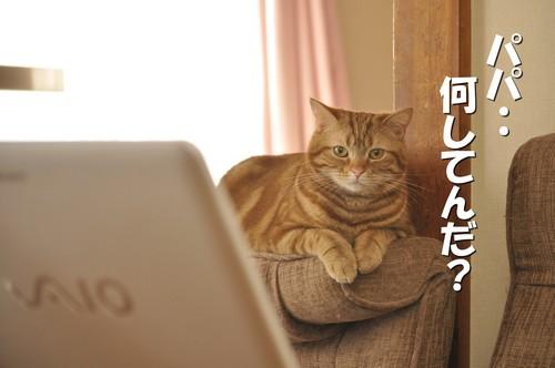 017_20120315113516.jpg
