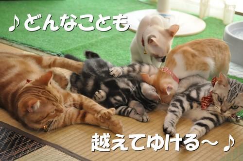 033_20120107200849.jpg