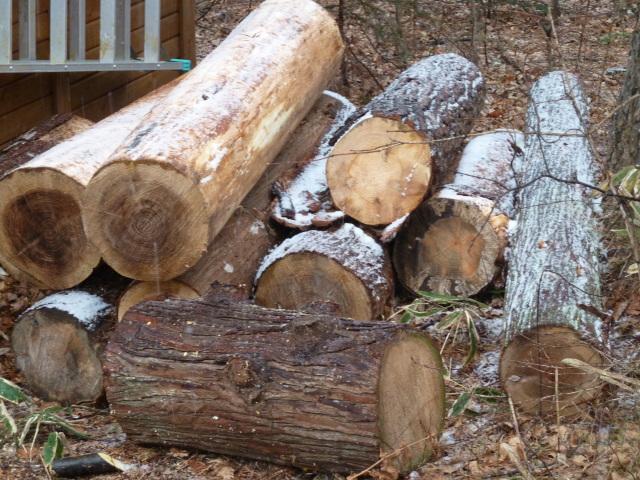 伐採木を移動