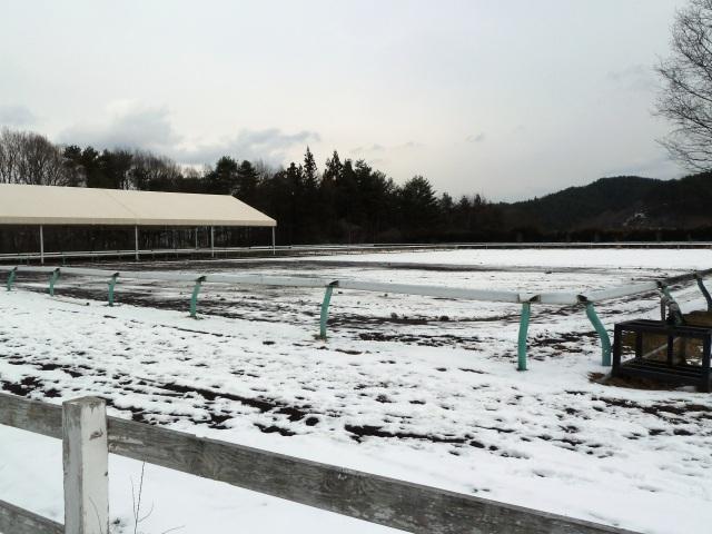 雪の馬事公苑
