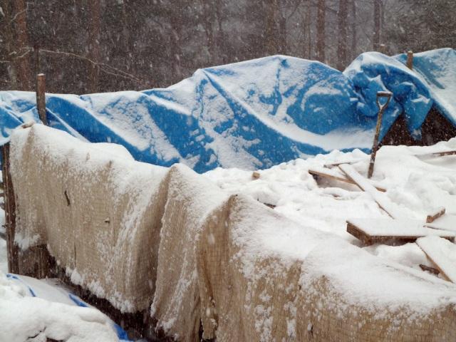 養生シートに雪が積もる