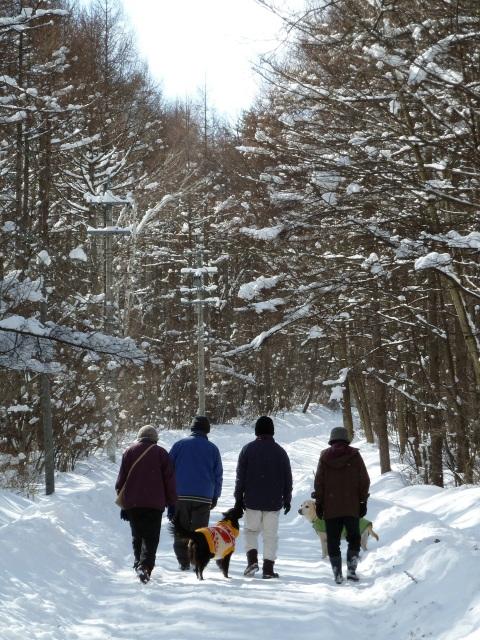冬の散歩 森の中