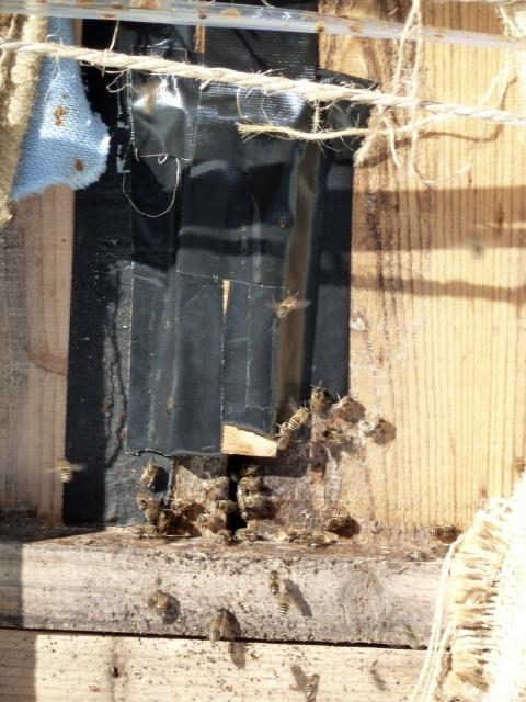 巣箱にハチが飛ぶ