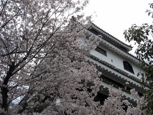 岩国城とソメイヨシノ