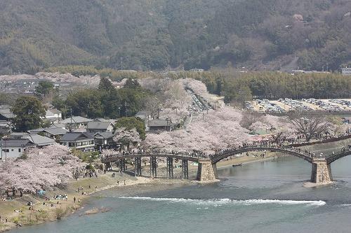 錦帯橋とソメイヨシノ