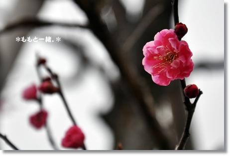 大乗寺丘陵公園3月 068