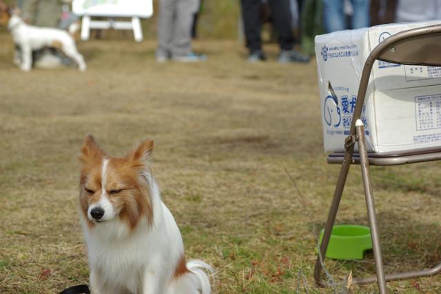 2009 11 01 レジーナの森カップ  (38)