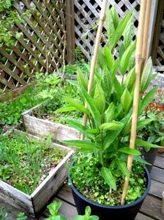 my-garden 024 (2)