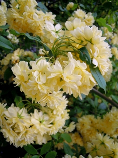 my-garden 117