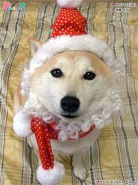 サンタラメ帽子 クリスマスフェア