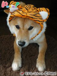 Pets!モデル「トラさん帽子」