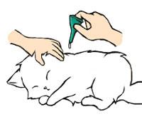 猫のノミ・ダニ・条虫予防