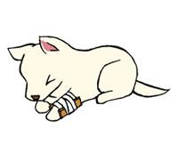 月①プレゼント 愛犬・愛猫免許証