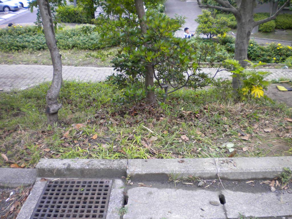 bush clean after