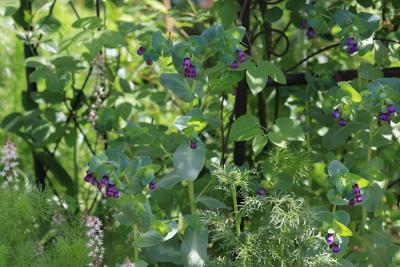 garden3008