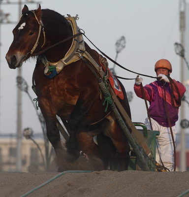 horse2105