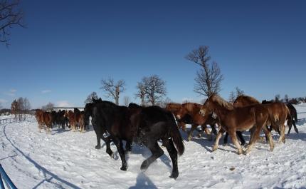 horse2108
