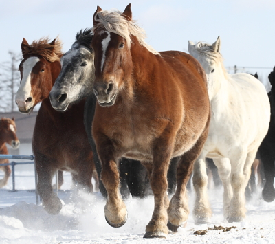 horse2109