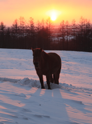 horse5005