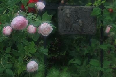 rose3010