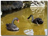黒鳥-2-