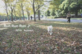 runnrunn_convert_20101104012150.jpg