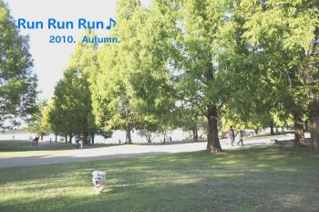 runrunrunrun_convert_20101104012249.jpg