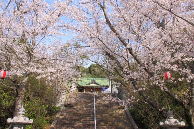 桜・護国神社s