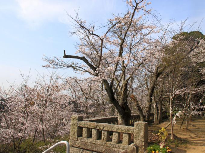 桜・石垣s