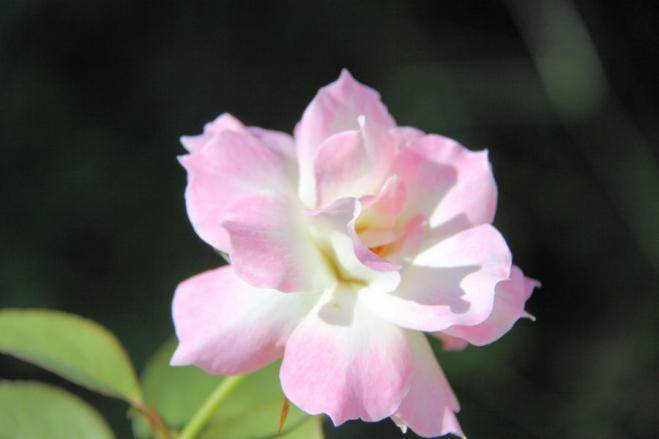 IMG_4925花