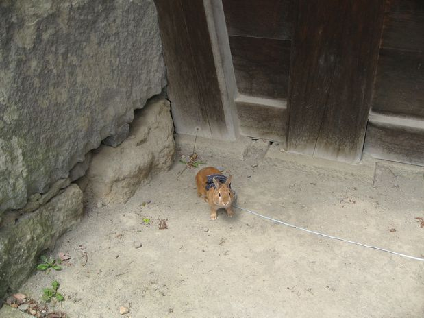 20100529 上田城 004