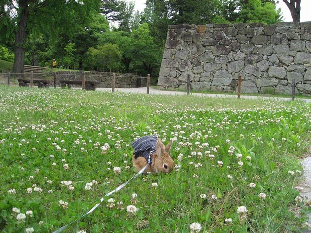 20100529 上田城 012