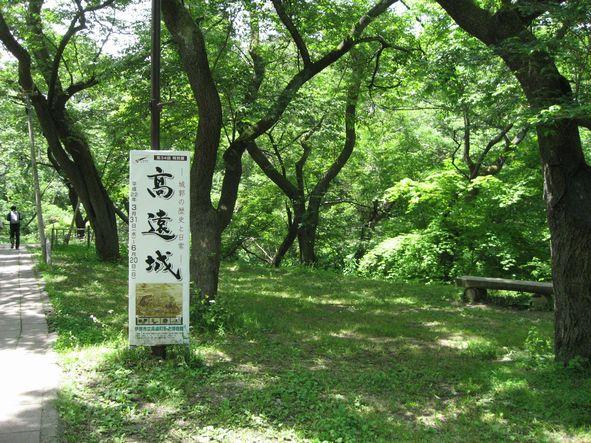 高遠城本丸の桜